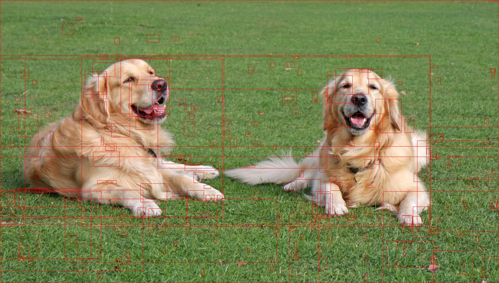 selective search for object detection  c      python