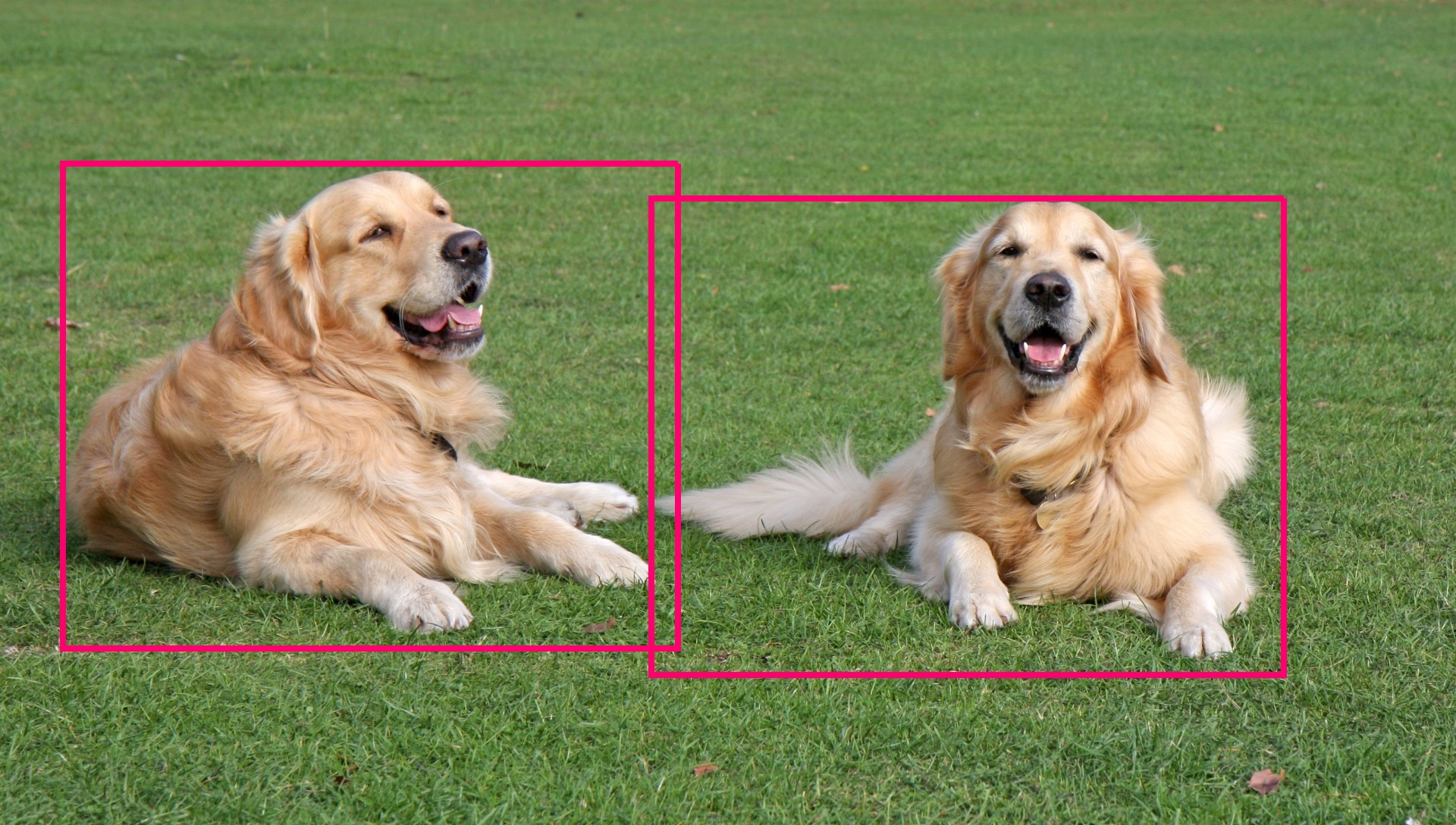 Selective Search for Object Detection (C++ / Python) | Learn
