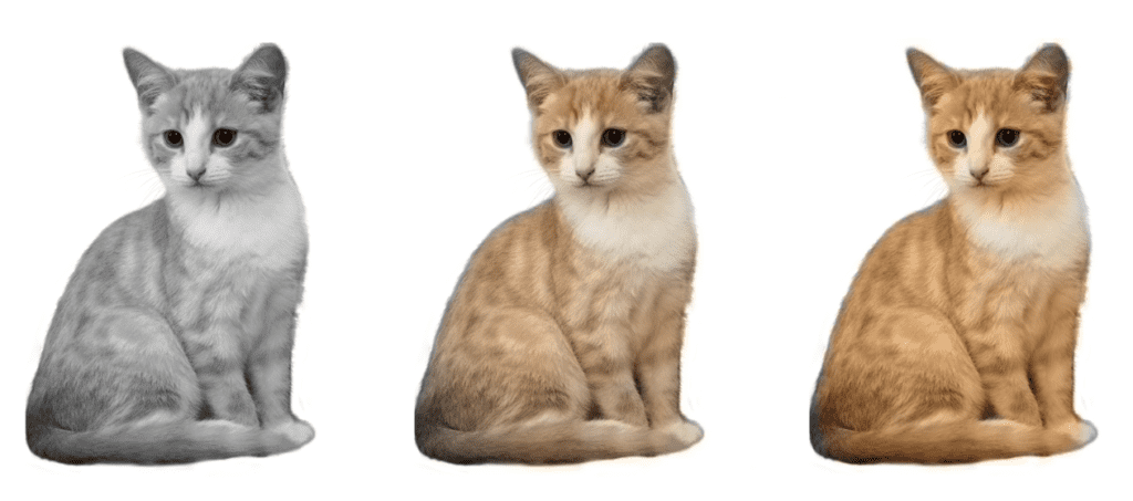 Colorization example without and with color rebalancing - Cat