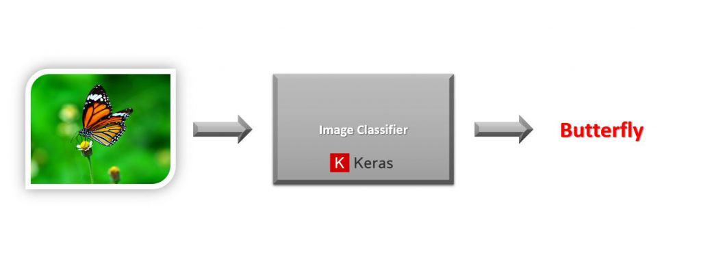Image classification with keras on a butterfly image