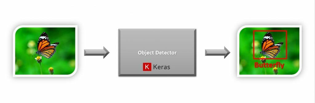 Object Detection with keras on a butterfly image.